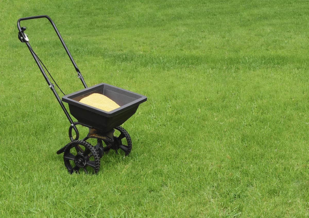 Fertilizing your lawn in the summer